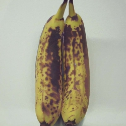 Banana Couple