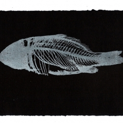 Fish Skeleton White
